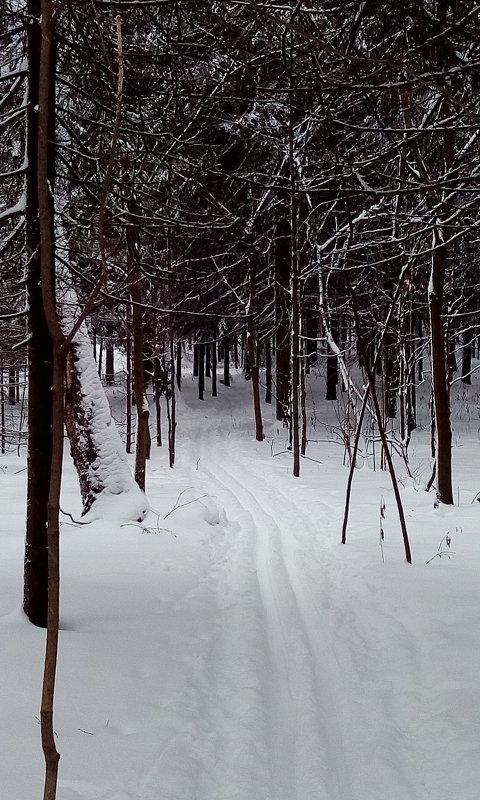 Лыжня в Ботаническом саду, январь 2016 г. - Ермаков Александр