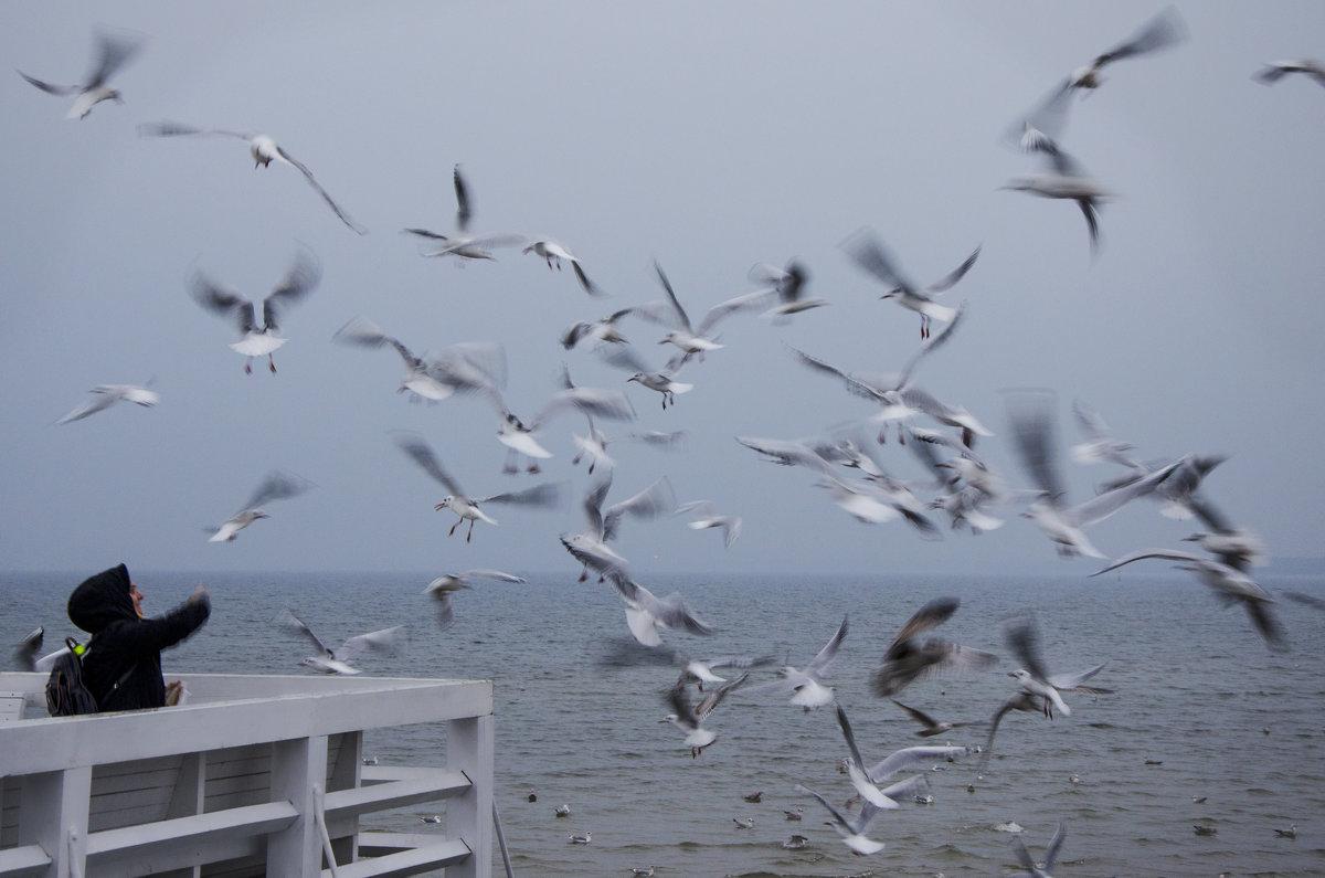 Море - Алексей Василюк