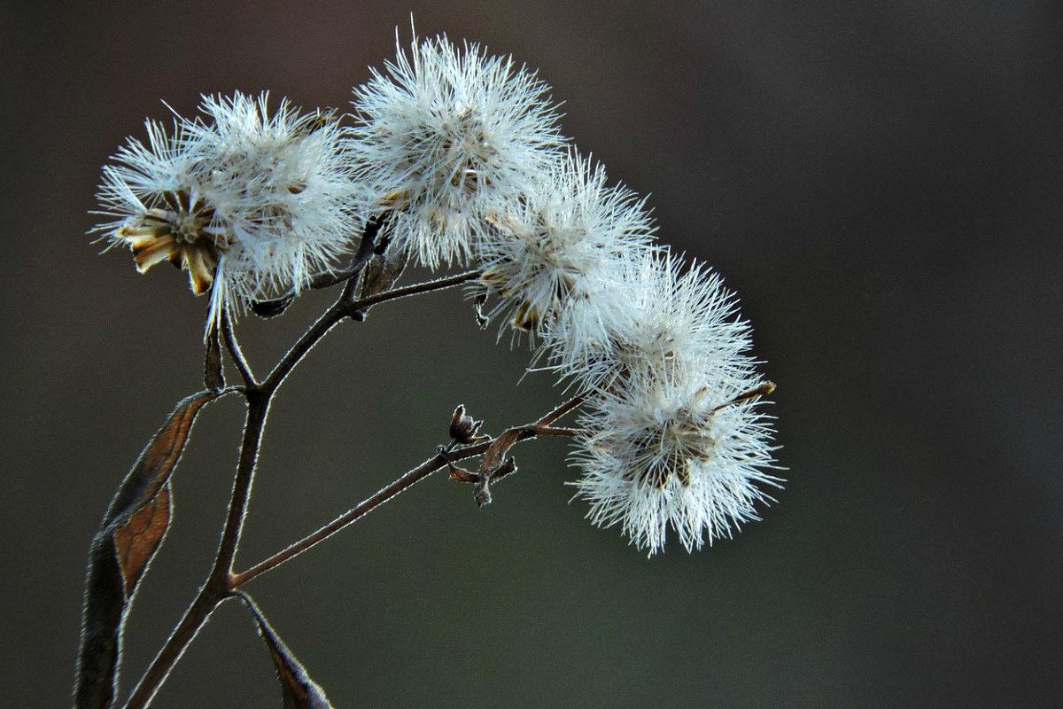 Зимние цветы - Tatiana Belyatskaya