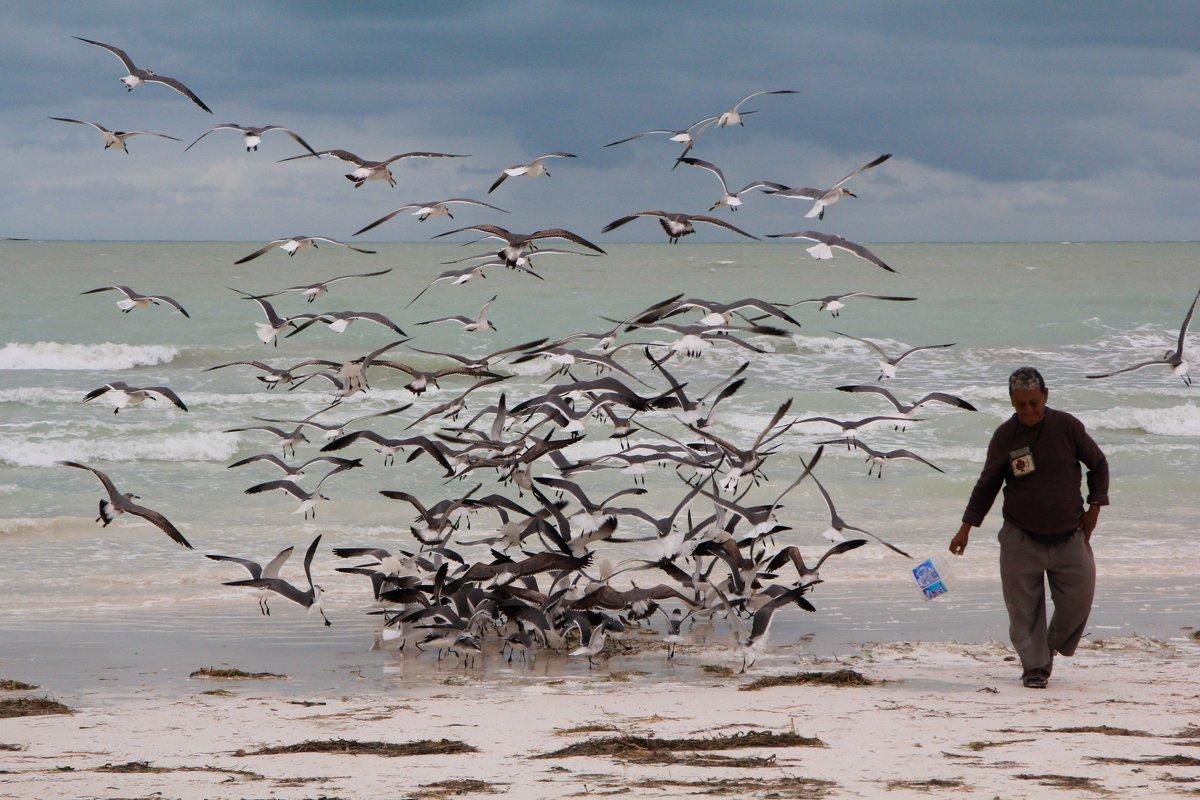 чайки рыболовы