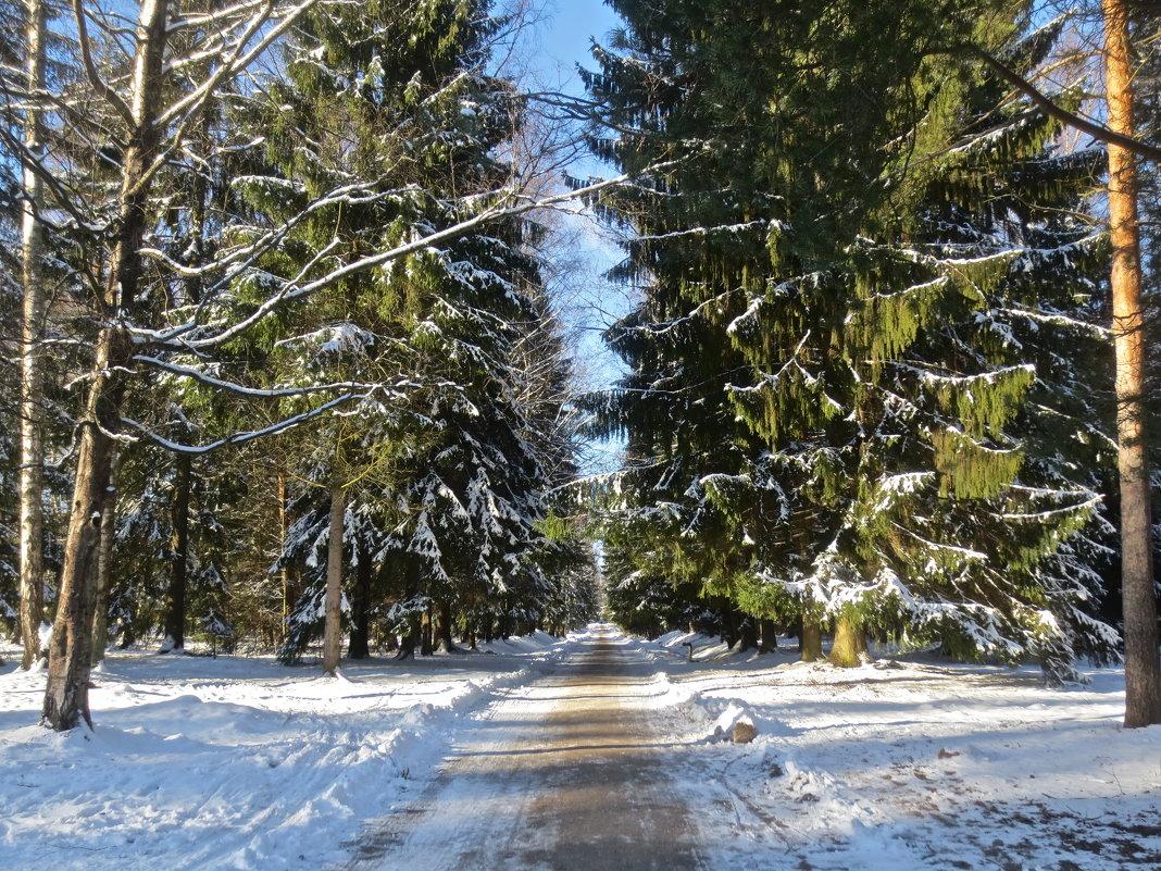 последние зимние дни - Елена