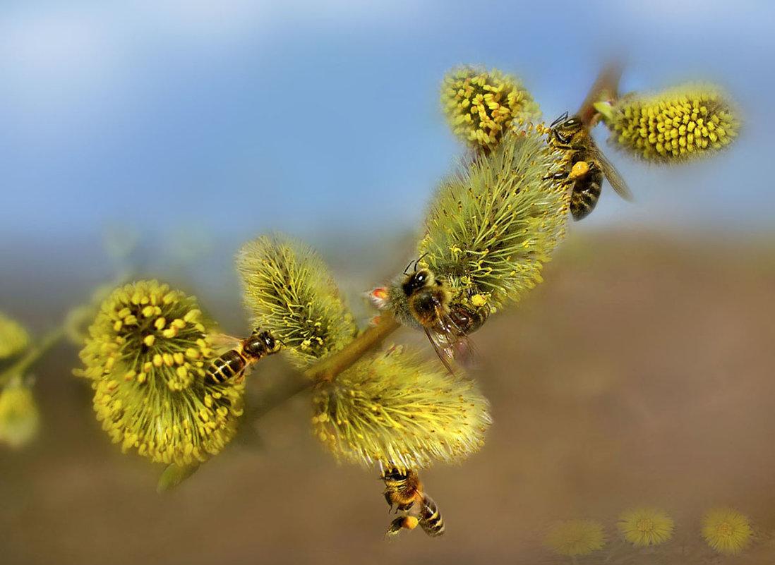 Ода маленькой пчеле - Удивительное Рядом