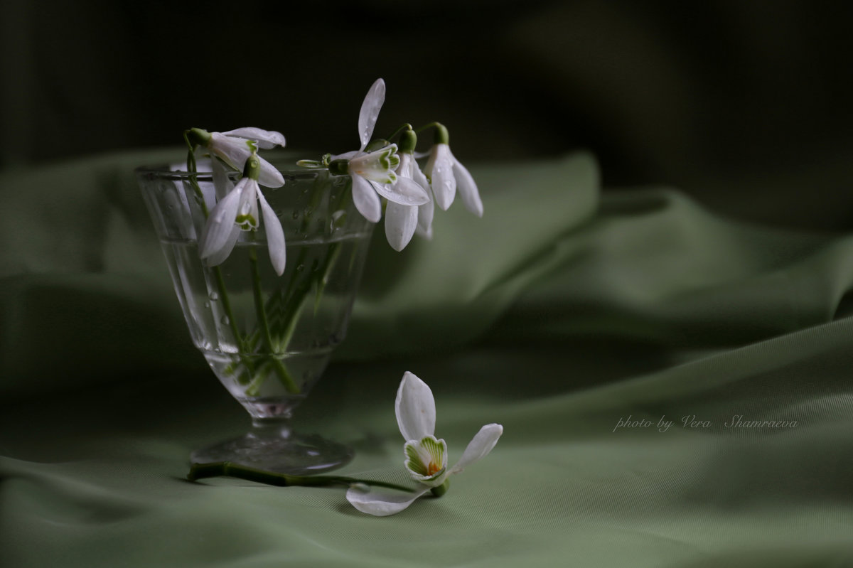 Первоцветы - Вера Шамраева