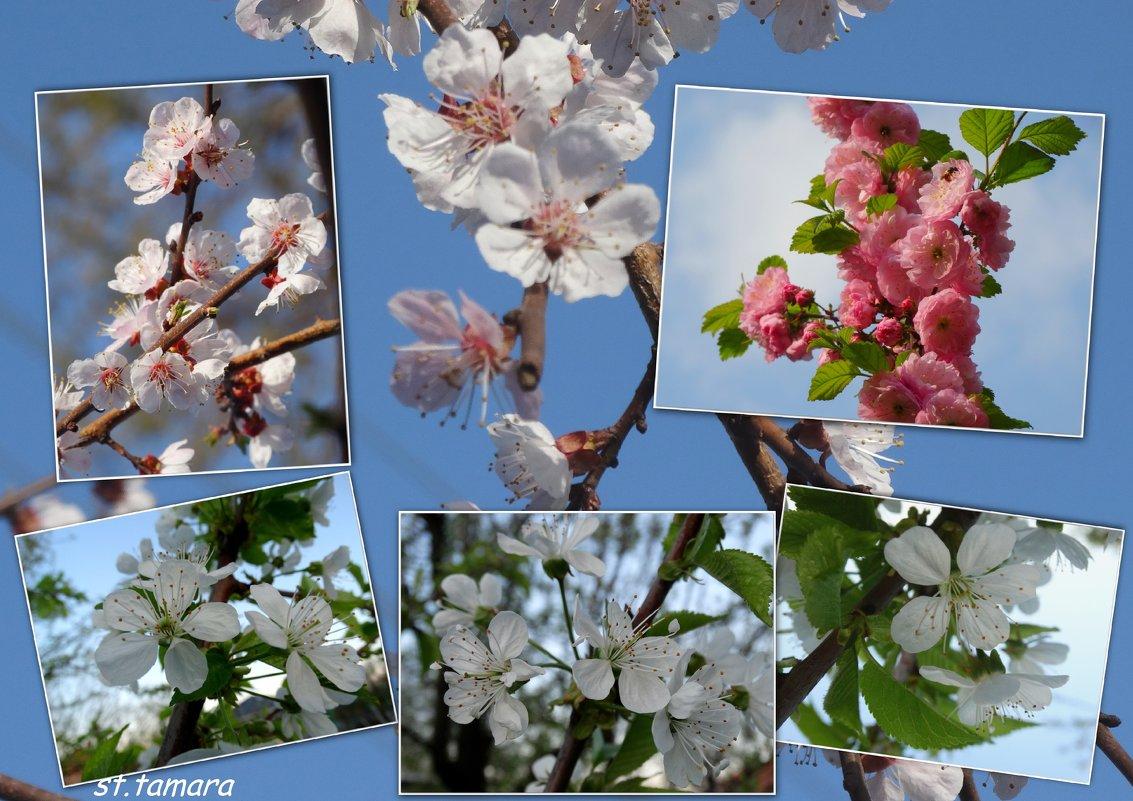 Весна во всей красе... - Тамара (st.tamara)