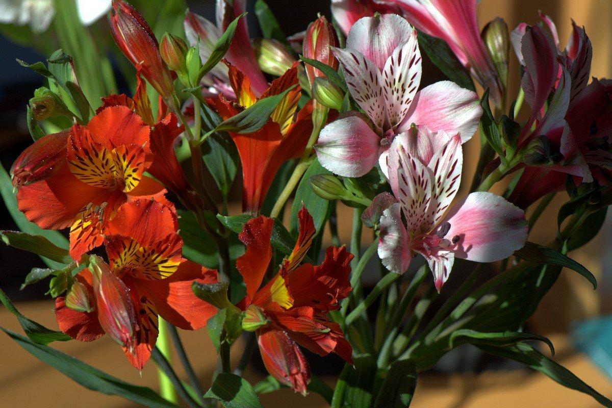 Цветы для любимой - Александр Грищенко
