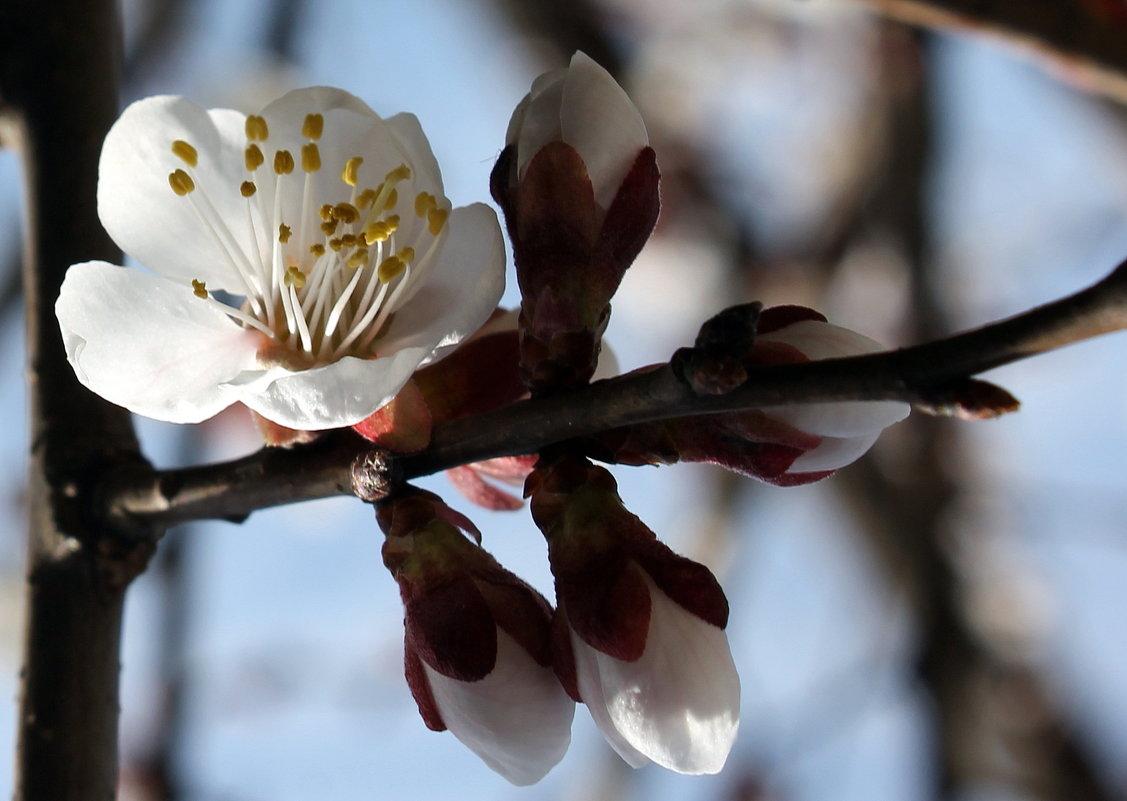А у нас во дворе абрикосы цветут ! - Валентина ツ ღ✿ღ