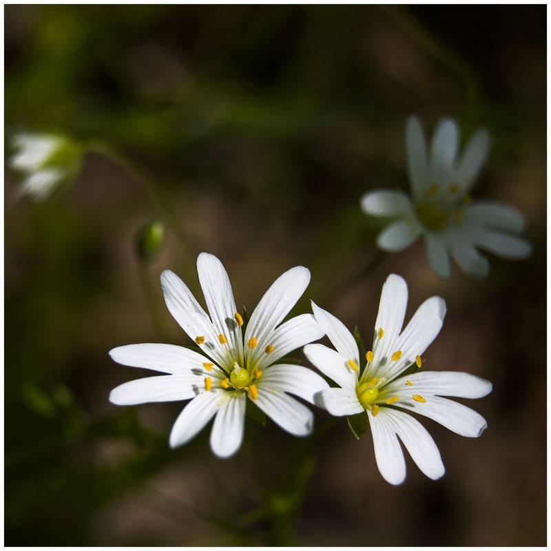 неизвестный цветочек - Виталий Бидюк