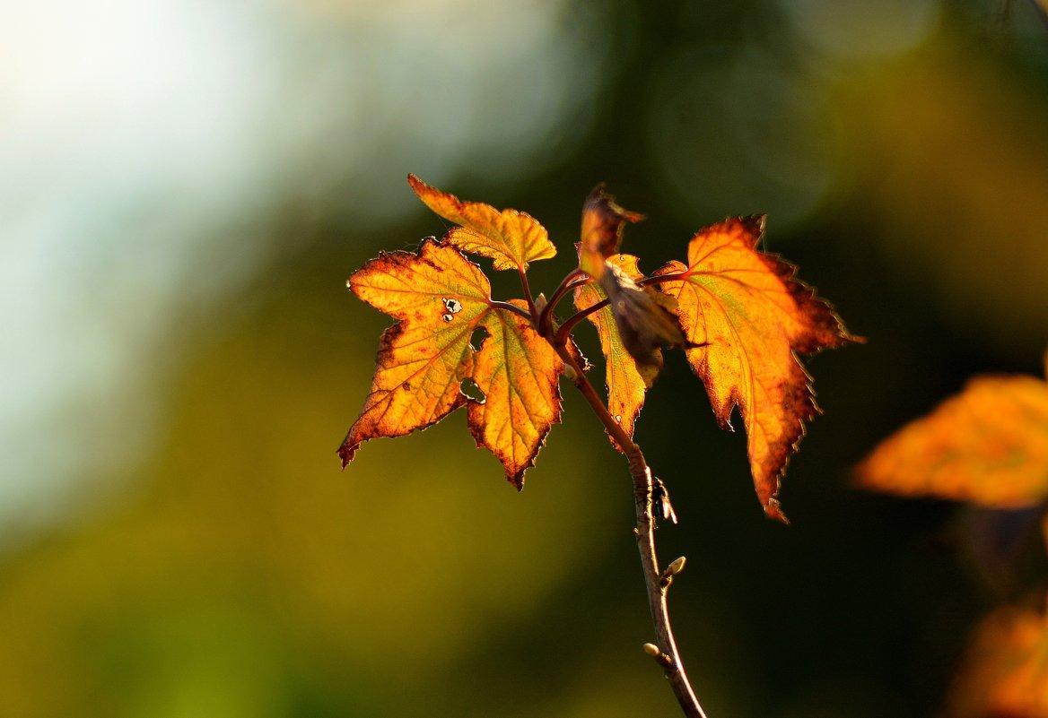 вспоминая осень... #2 - Андрей Вестмит