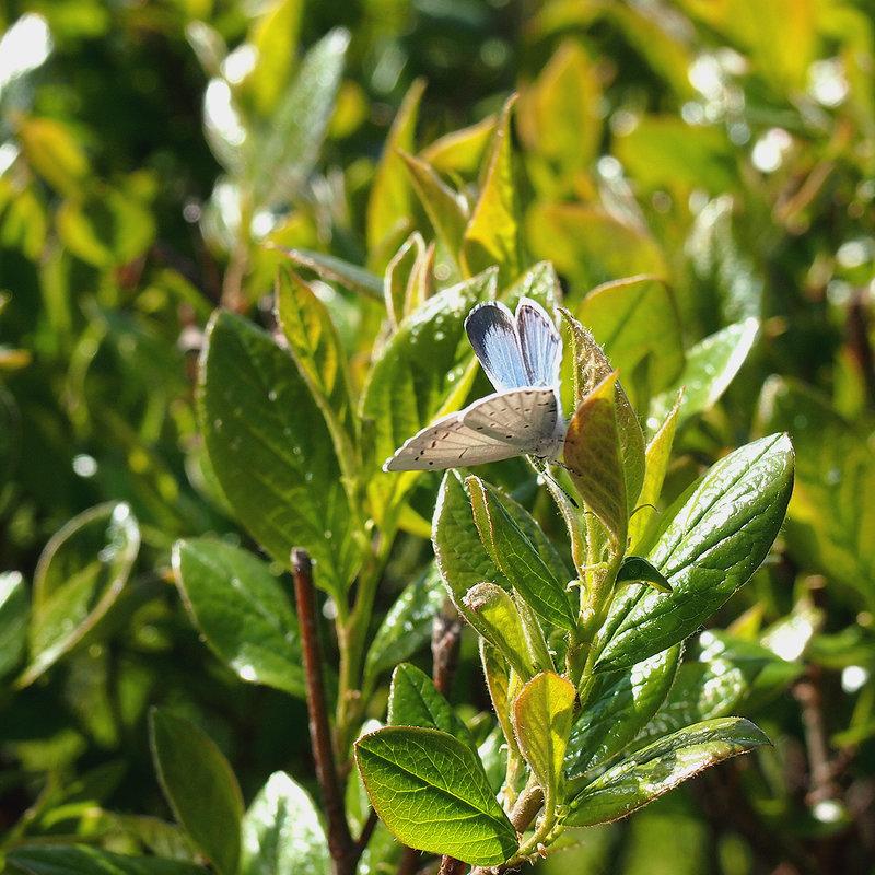 первые бабочки - Ирина ***