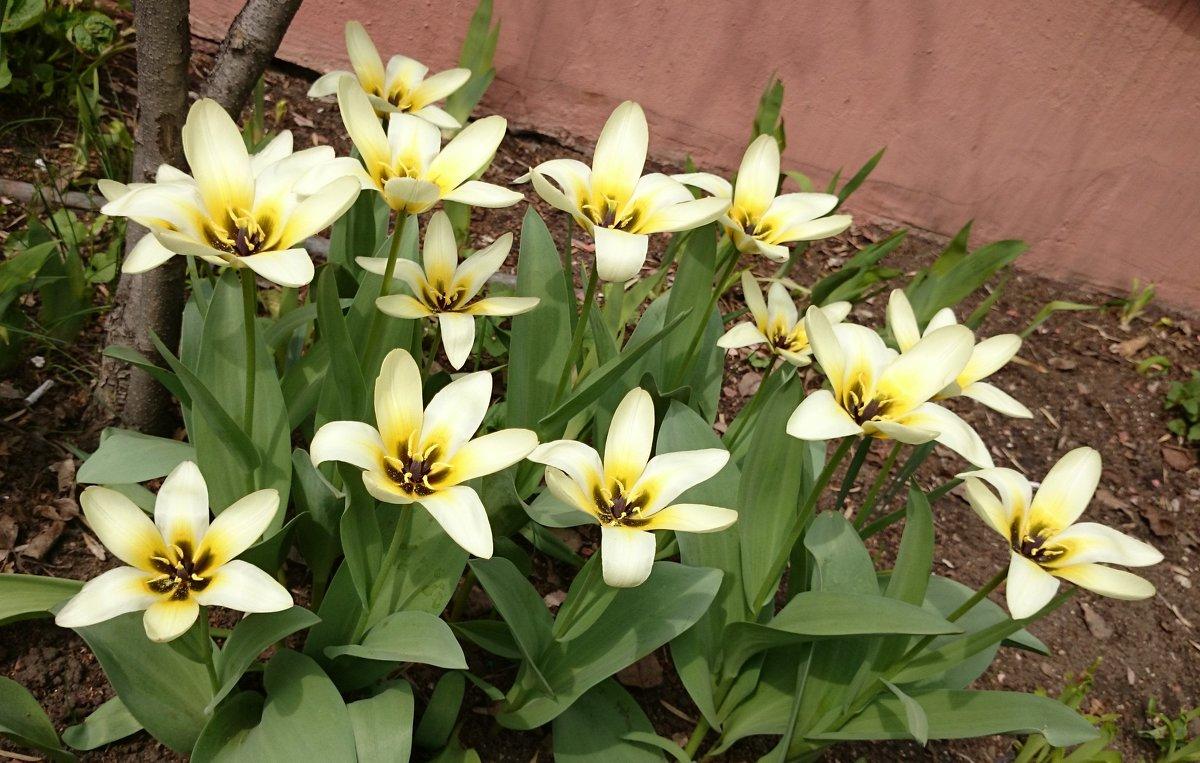 Весна ! - Galina194701