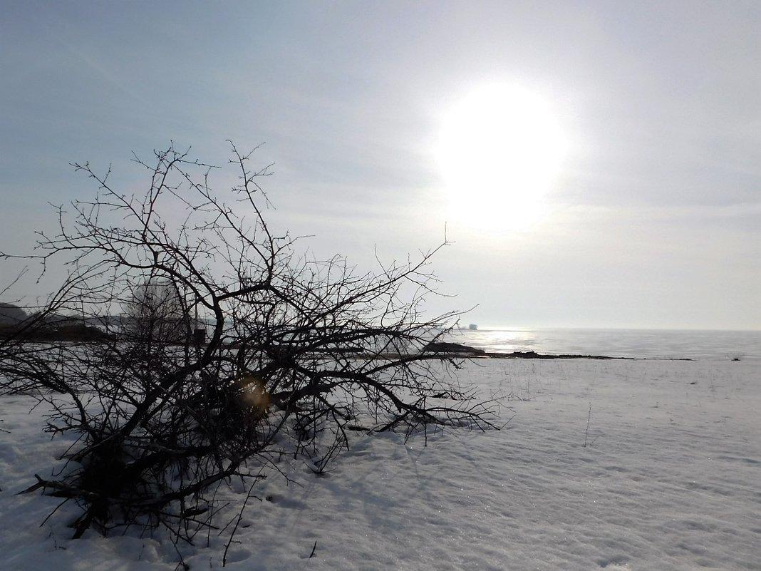 Мартовское солнце - Ольга Алеева