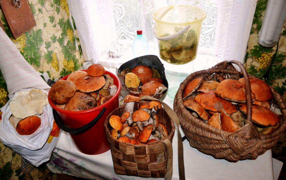 Кстати, о грибах.... - Vladimir Semenchukov