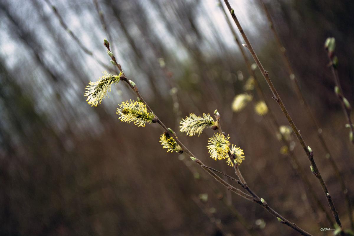 Весною... - Юрий