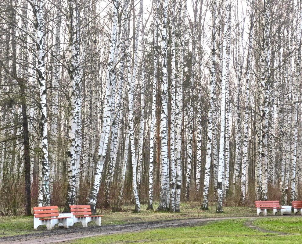 Муринский парк - Елена