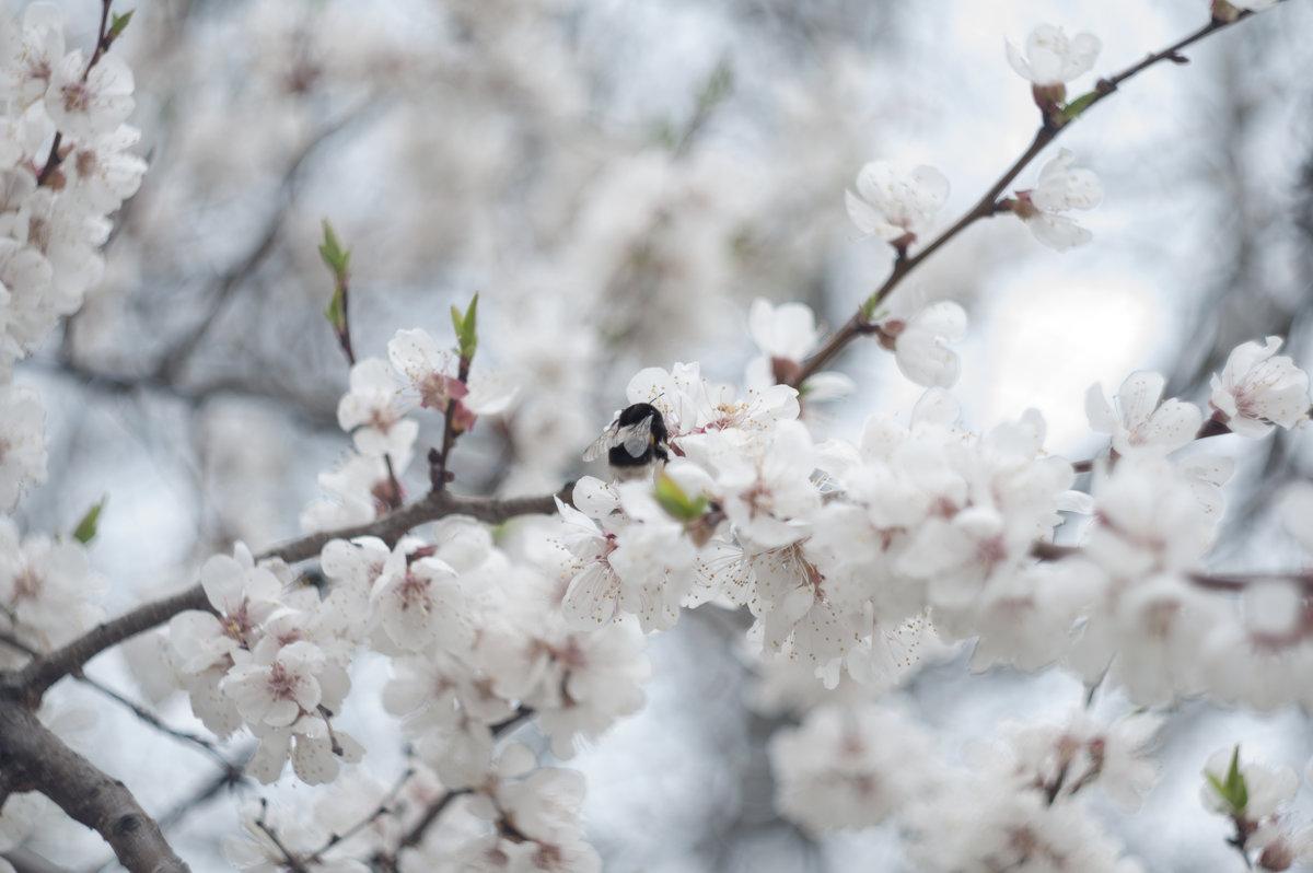 Flower_86 - Trage