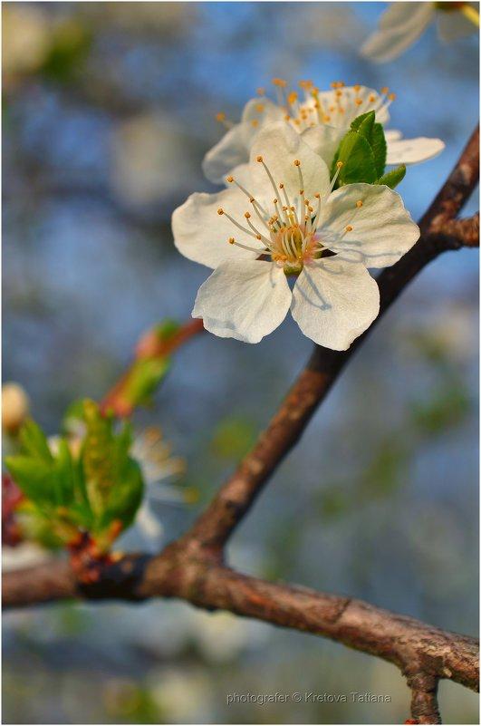 spring bloom - Татьяна Кретова