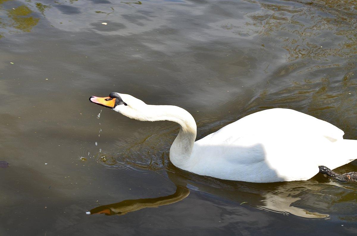 Белый лебедь - Татьяна Кретова