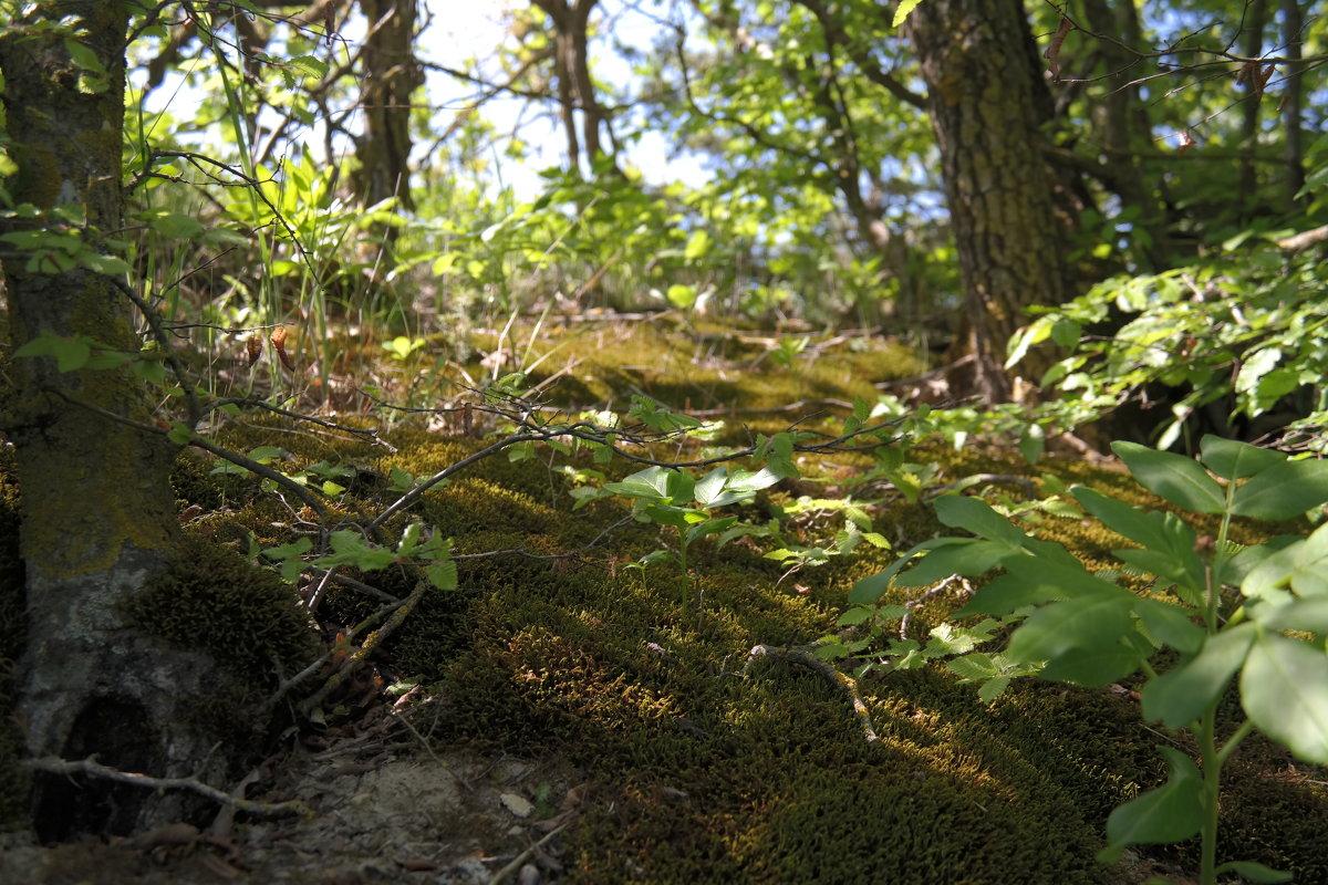 лес - ALEX MAK