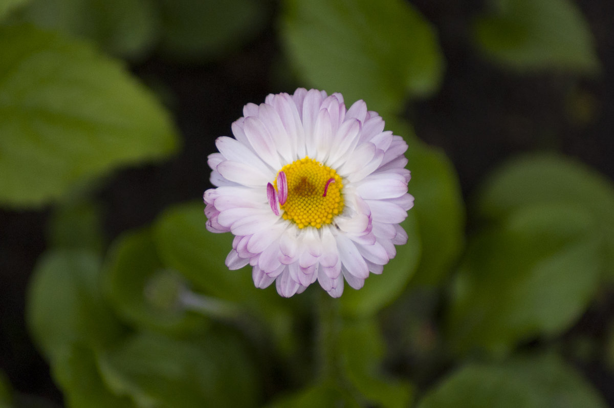Flower_84 - Trage