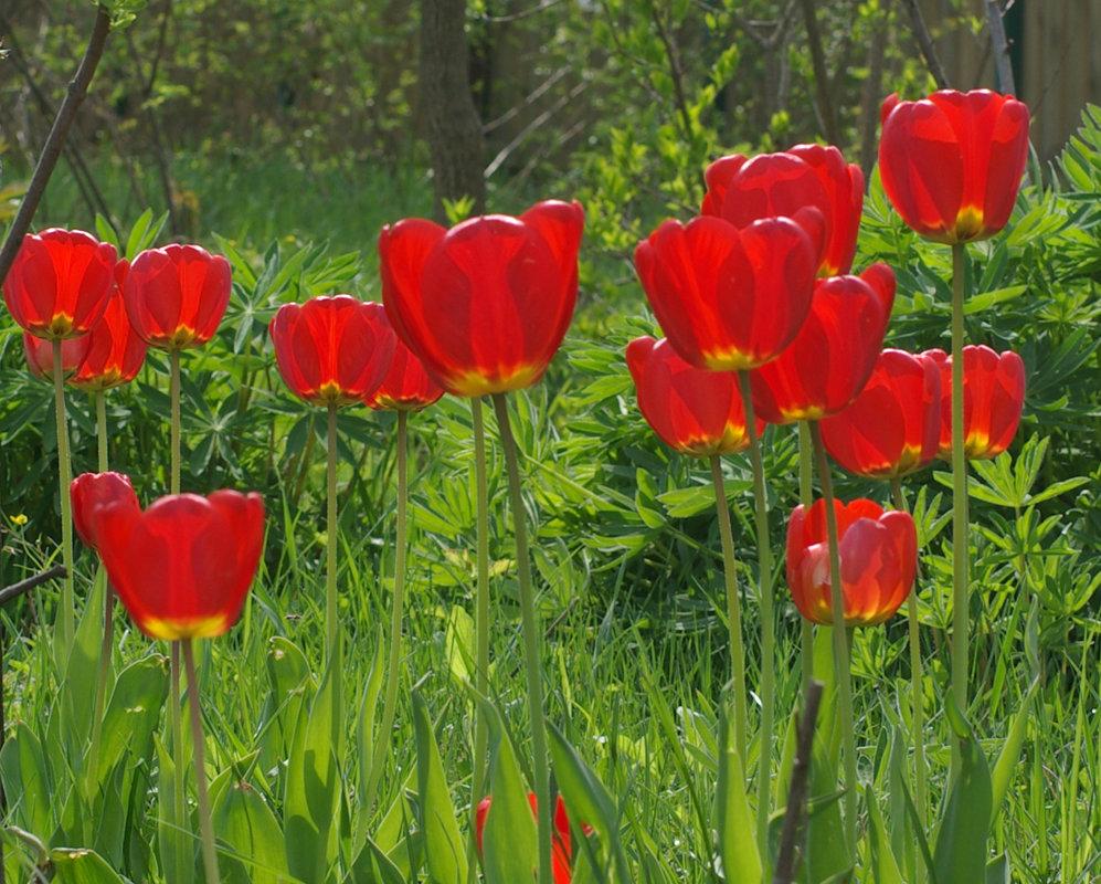 Весна красна - Игорь Шубовичь