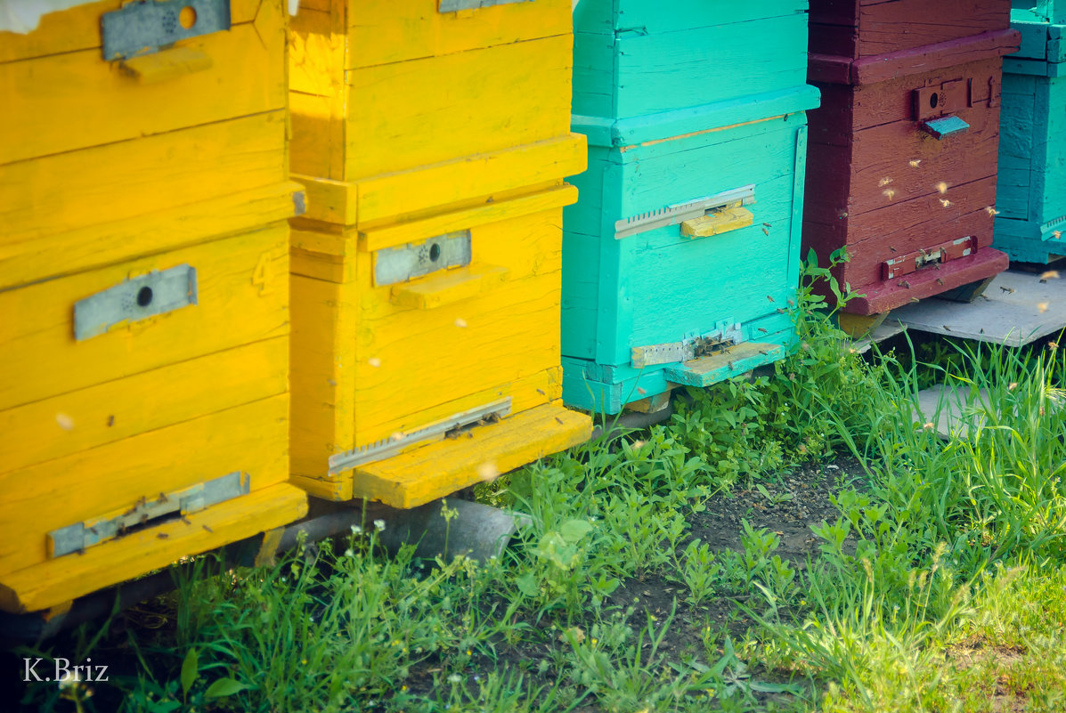 пчелки - Katya Briz
