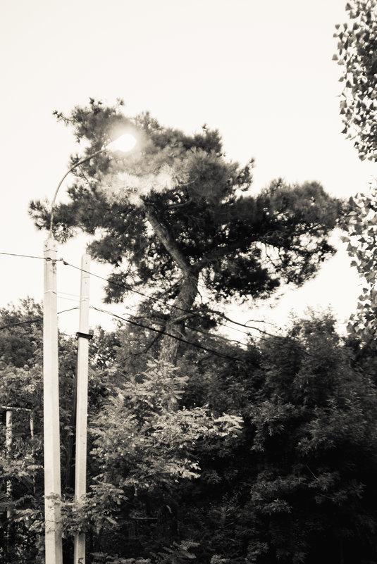 фонарь - Андрей Баканов