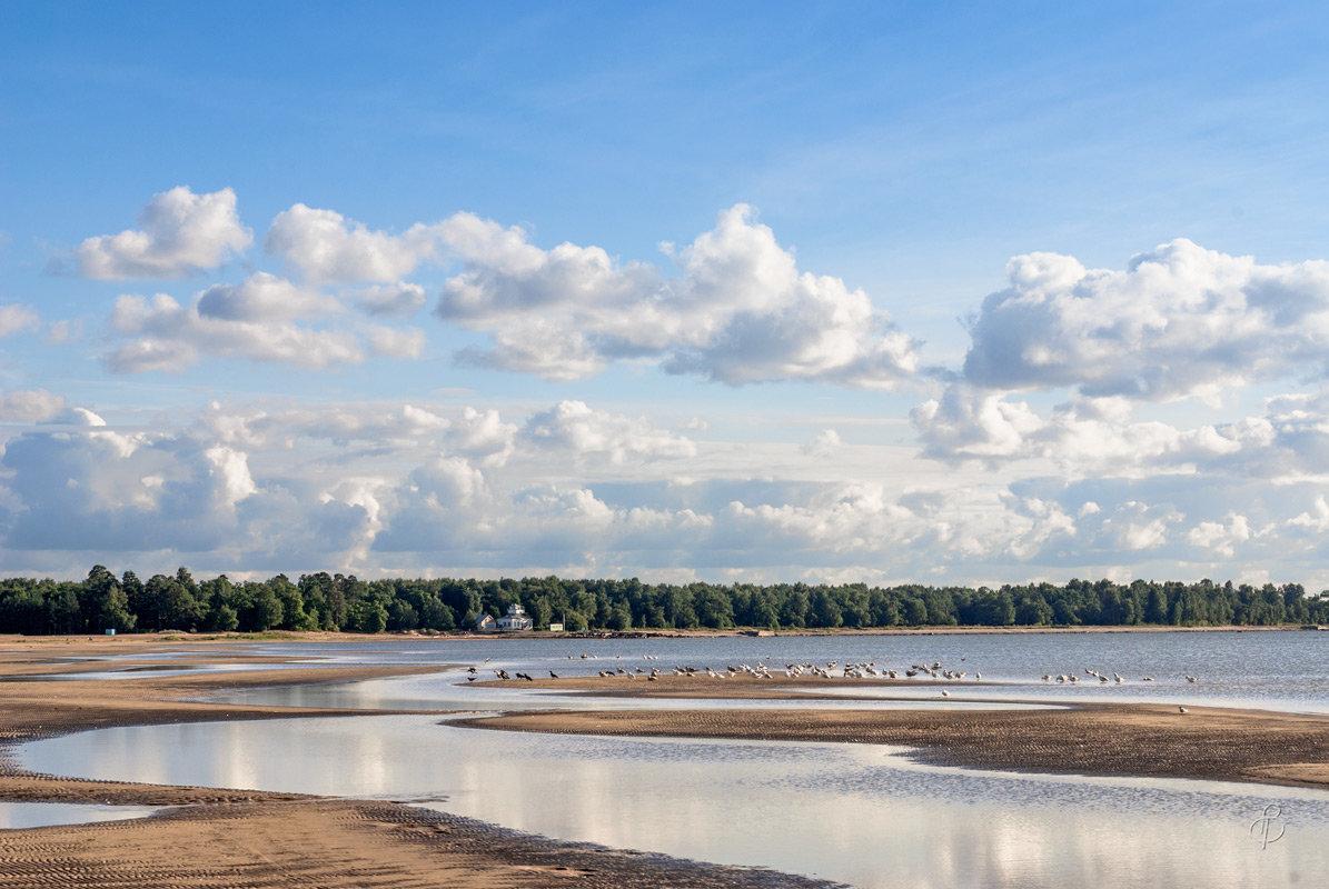 Вид на парк Дубки - Виталий
