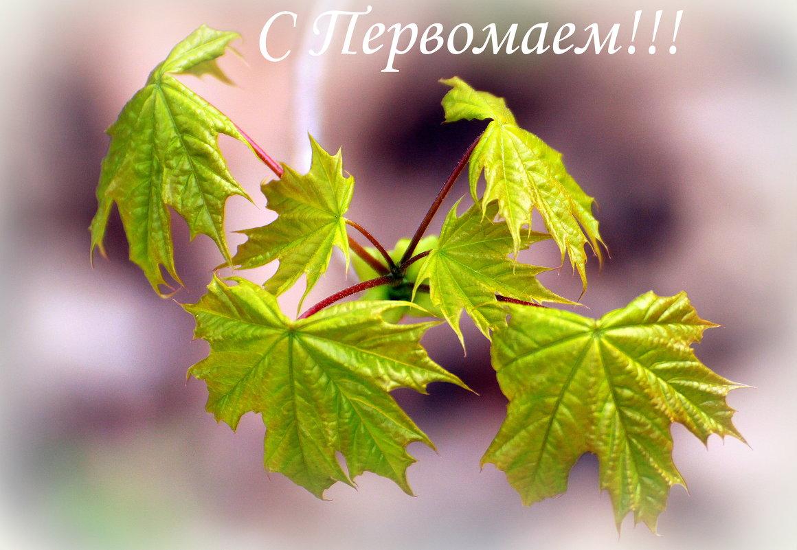 С Праздником весны и труда! - Вячеслав Минаев