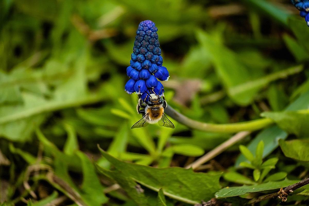пчелка - Игорь Щеулов