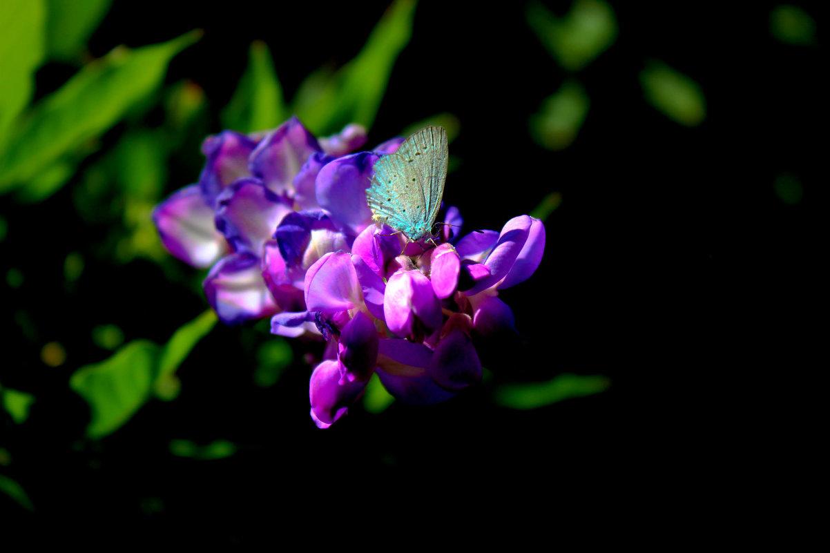 Бабочка - Николай П
