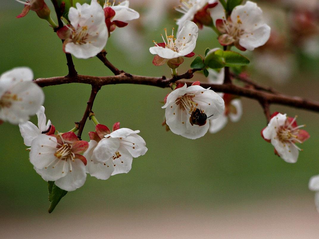 Весна полным ходом - Ирина ***