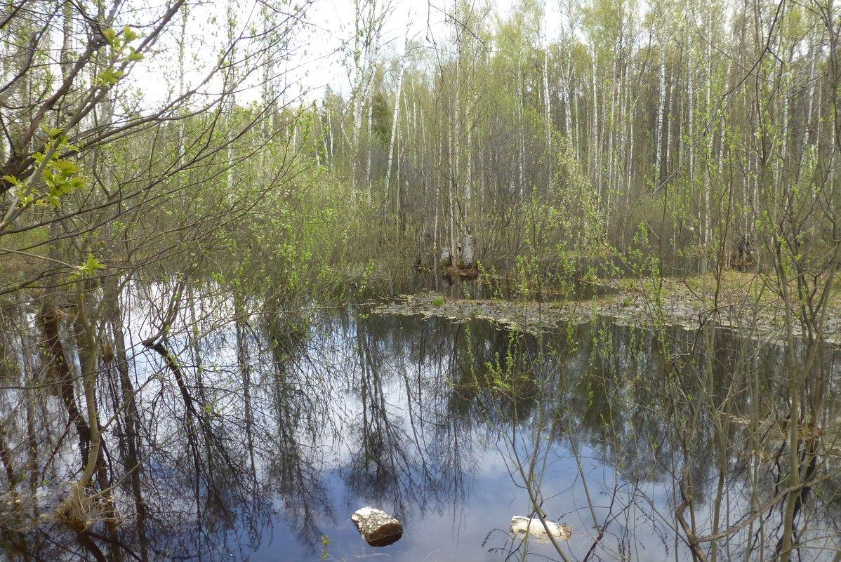 Юдинский лес - Наиля
