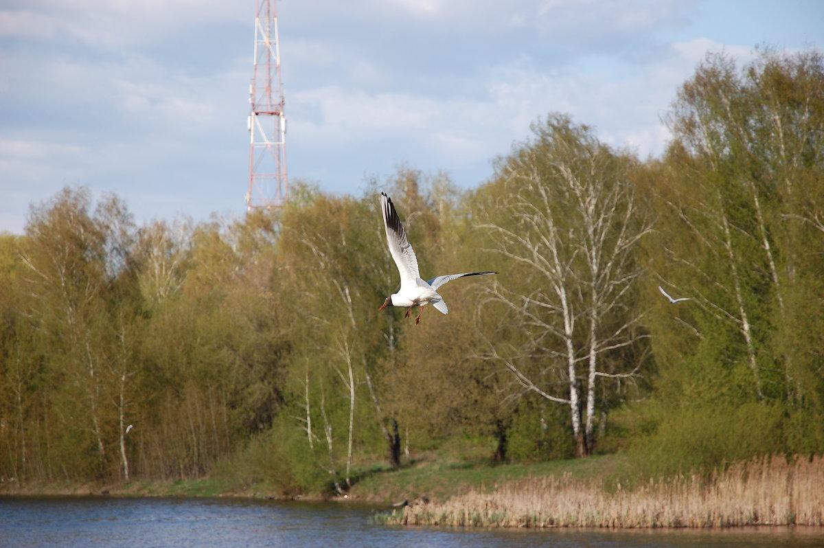 Чайка над прудом(2) - Александр Буянов