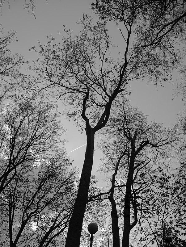 Деревья старого сквера - Тамара Цилиакус