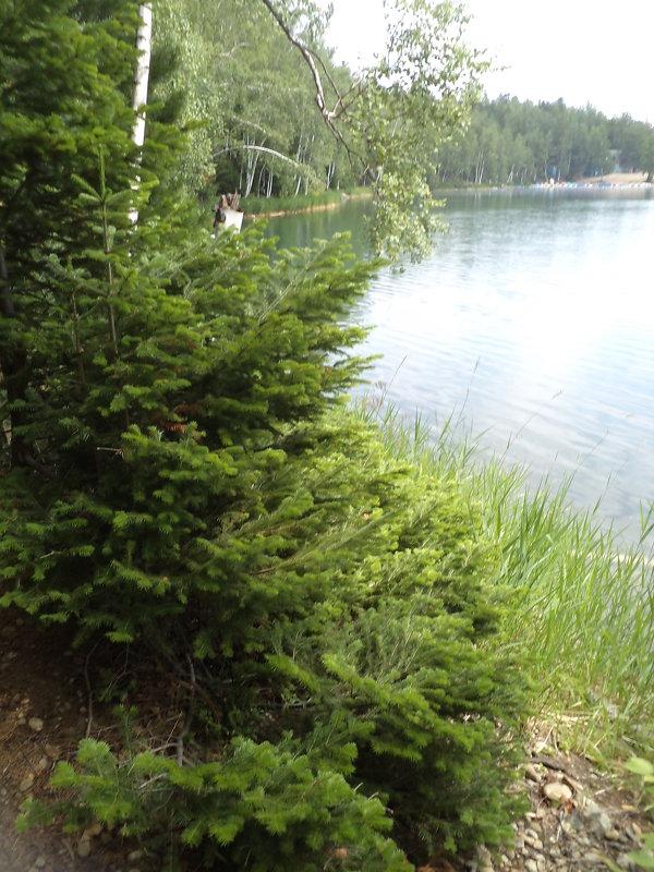 Берег озера - Надежда Малинкина