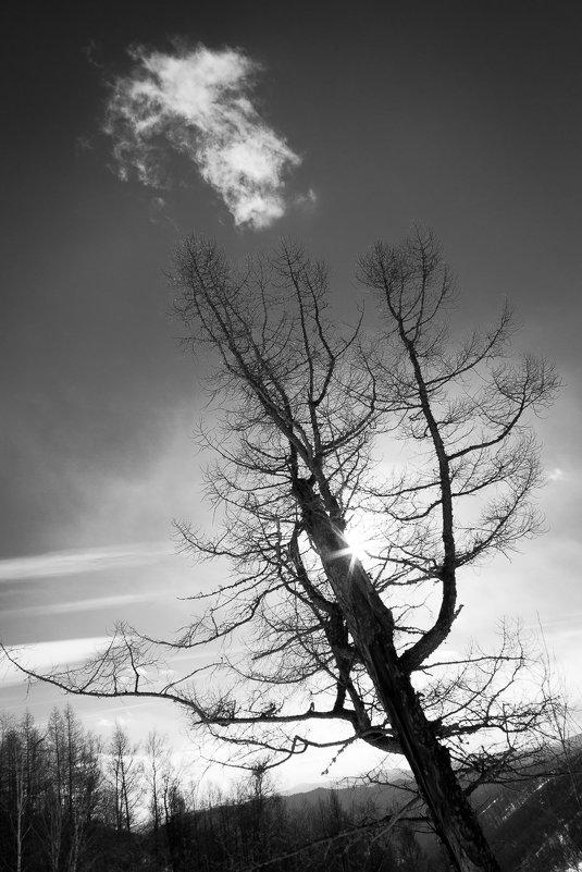 Вслед за облаком - Алексей (АСкет) Степанов
