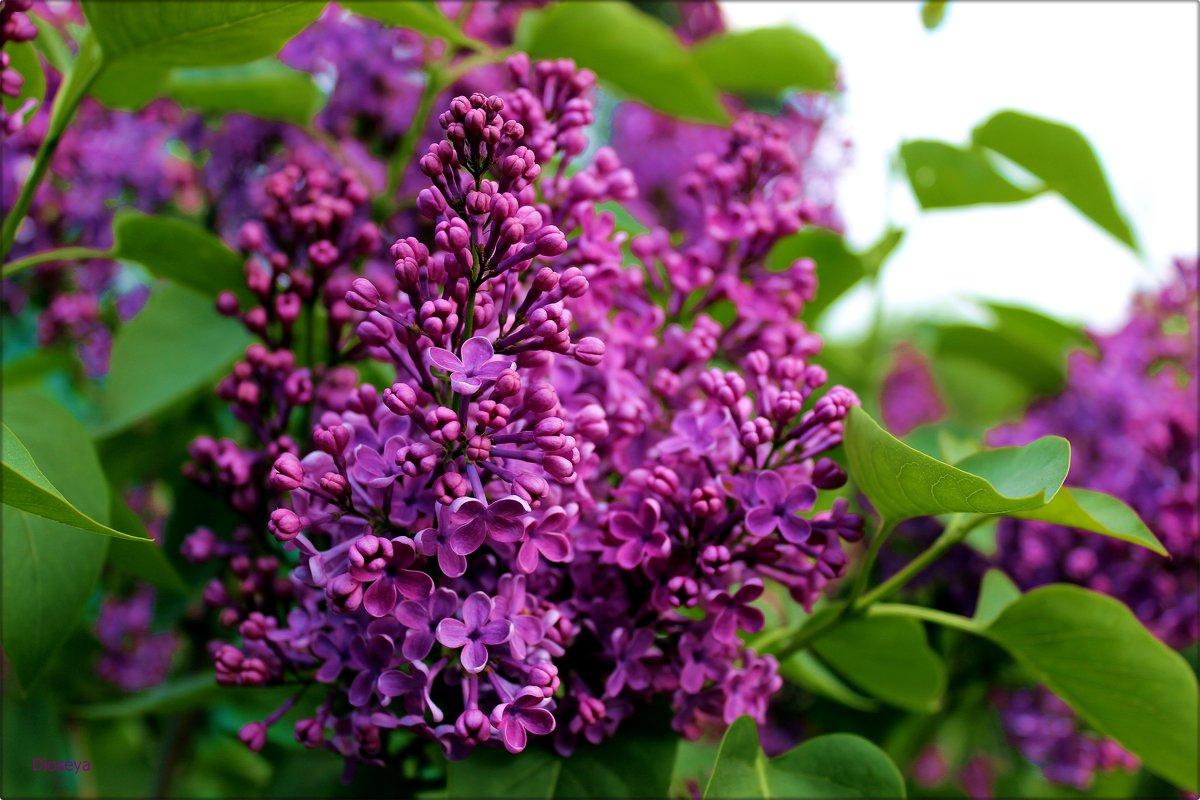 Буйство цветения - Татьяна Пальчикова