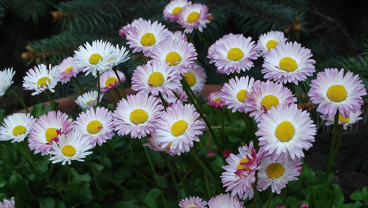 Весенние цветы - Владимир Бровко