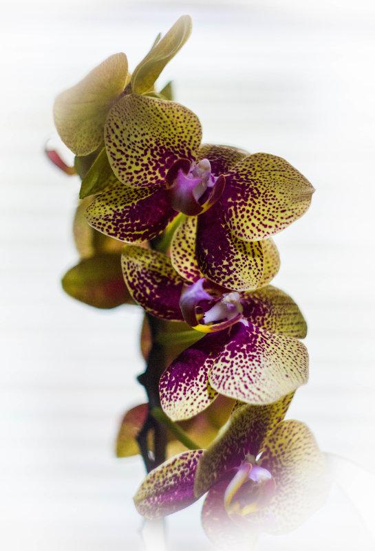 Весенняя орхидея. - Дмитрий Перов