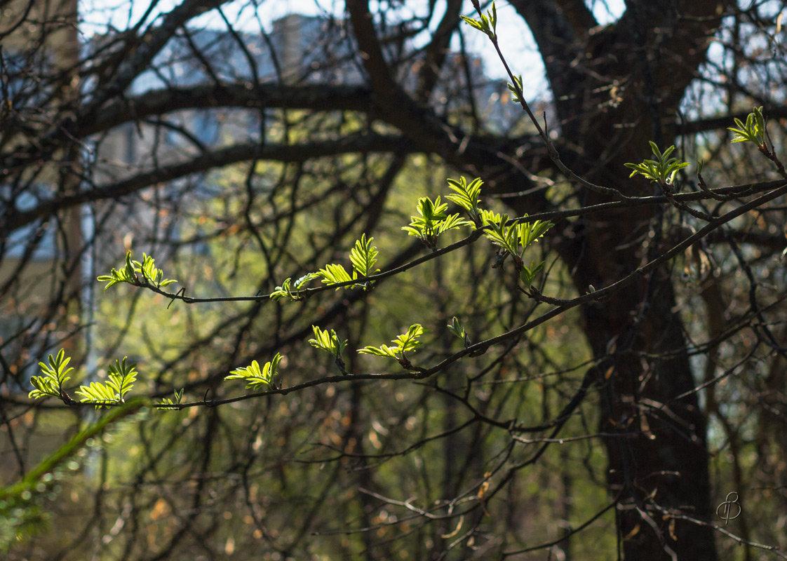 Весенний этюд - Виталий