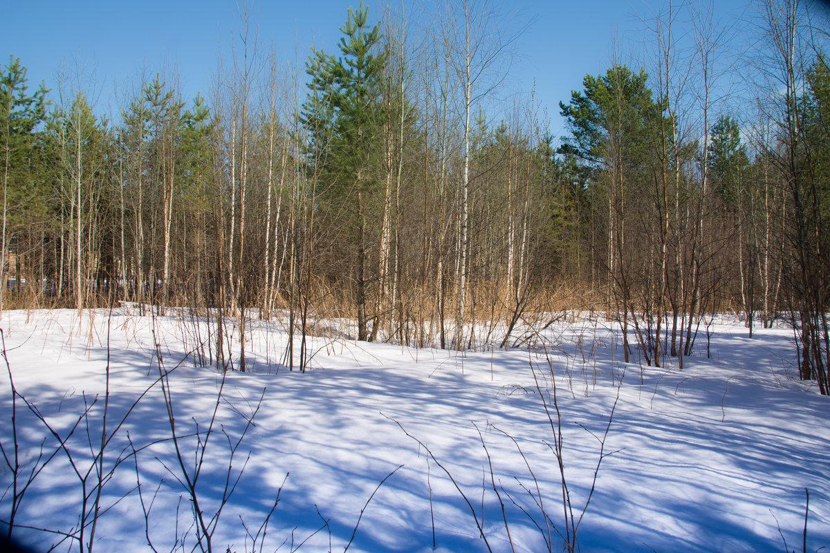 апрель на севере - Светлана Ку