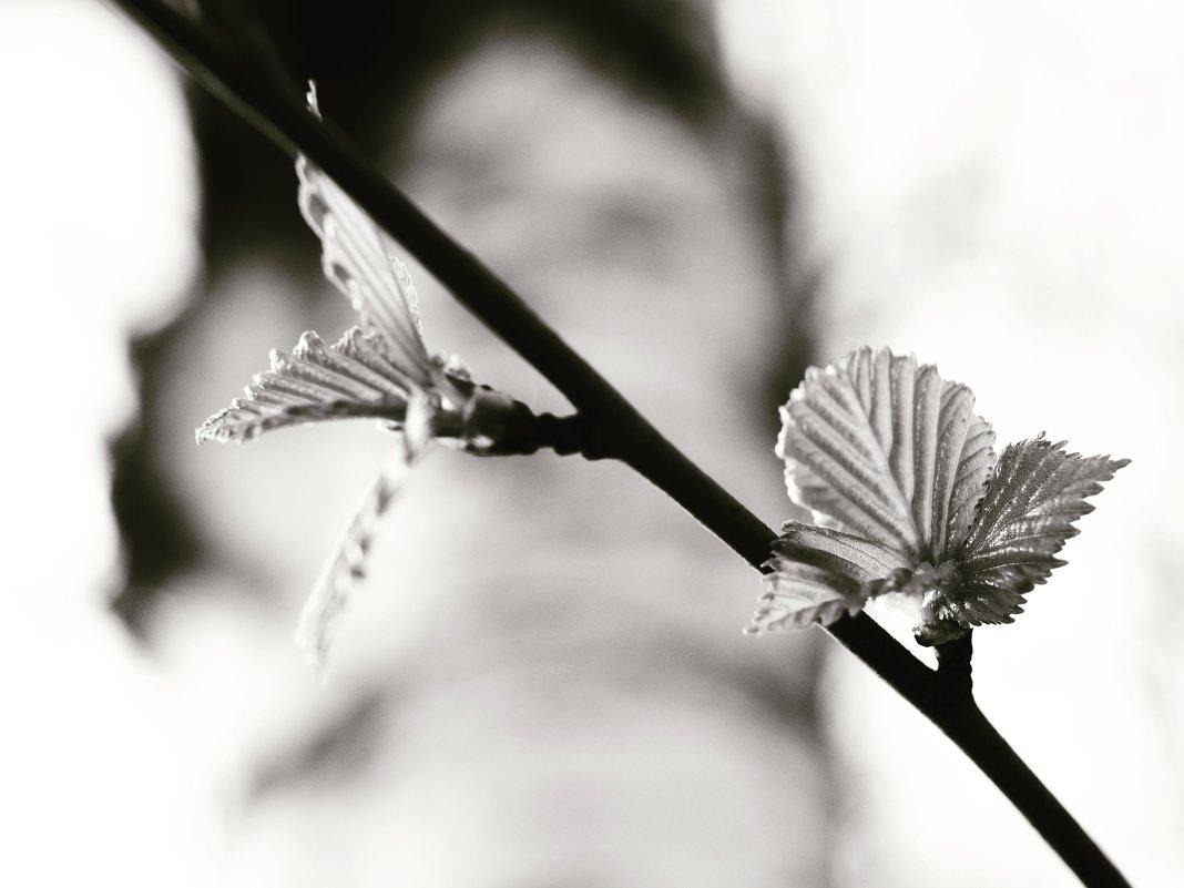 первые листья - Nikita S