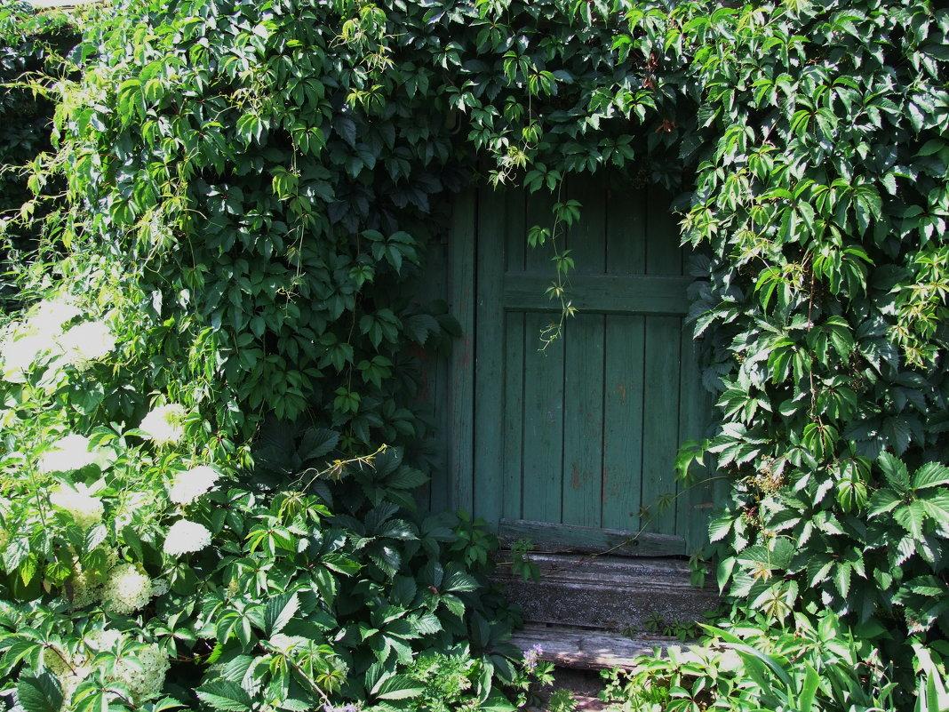 Зеленая дверь - Татьяна Белогубцева