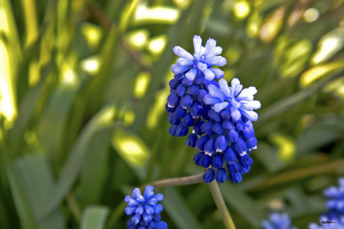 Весны улыбка - Юрий