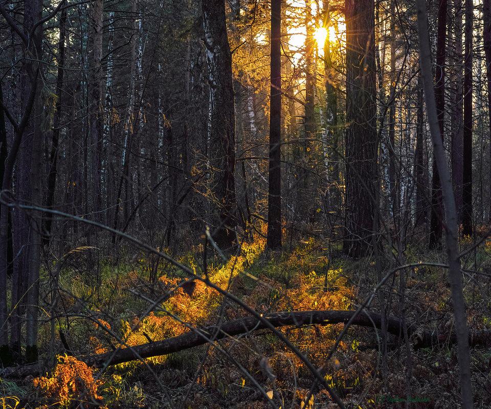Лучик света в осеннем лесу. - Vadim Piottukh