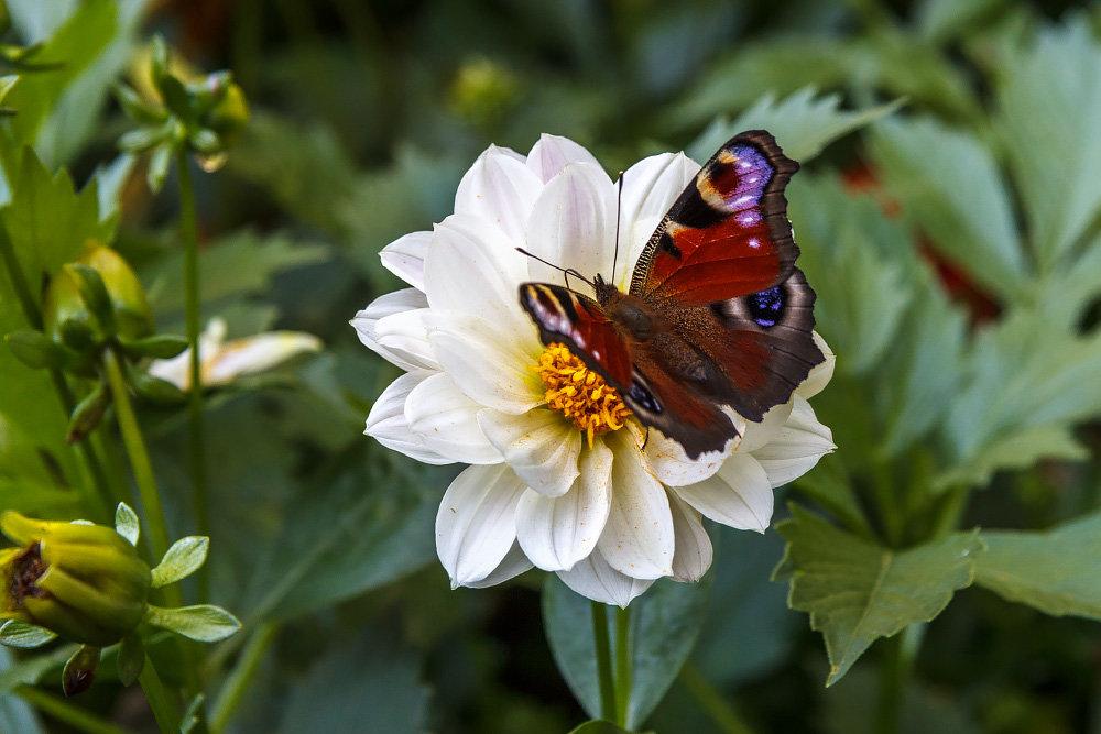 Butterfly - Евгений Садиков