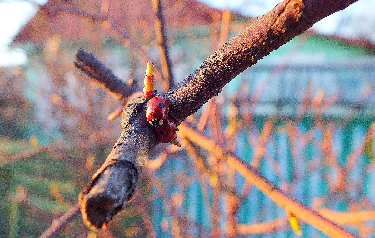 весна для божьих коровок... - Александр Прокудин