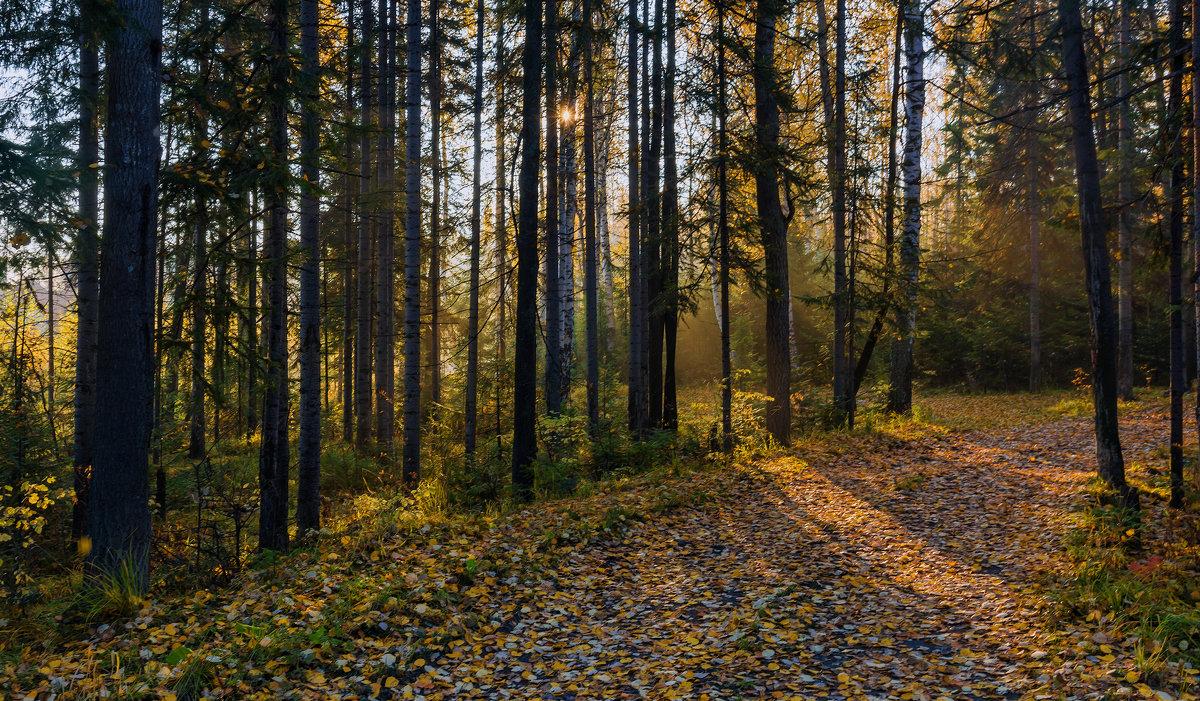 Утро в лесу - vladimir Bormotov