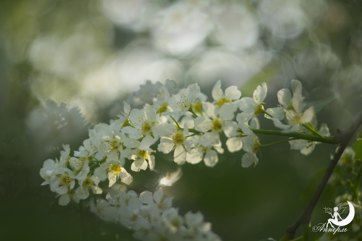 Цветы - Анна Кокарева