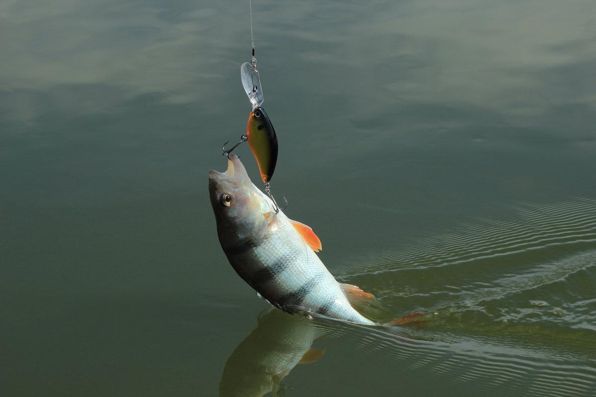 ловить крупную рыбу в дону